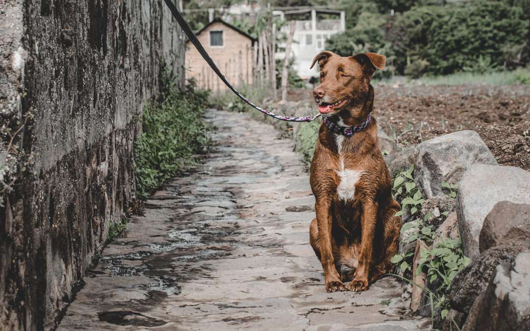 The Knotted Outdoor Leash that Reflects the Connection to Your Dog