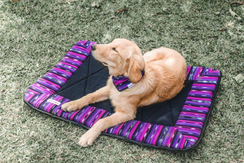 Golden Retriever lays on pink and purple dog travel bed while wearing a matching bandana