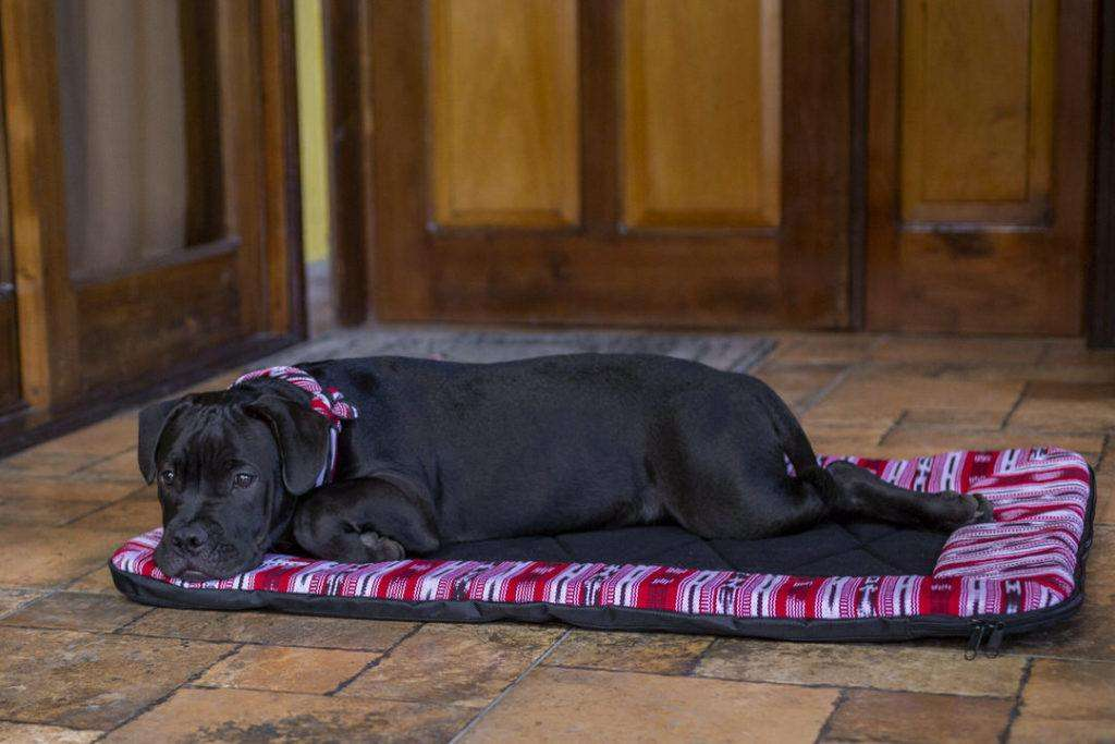 Black pug mix lays on red and black handmade dog bed on porch