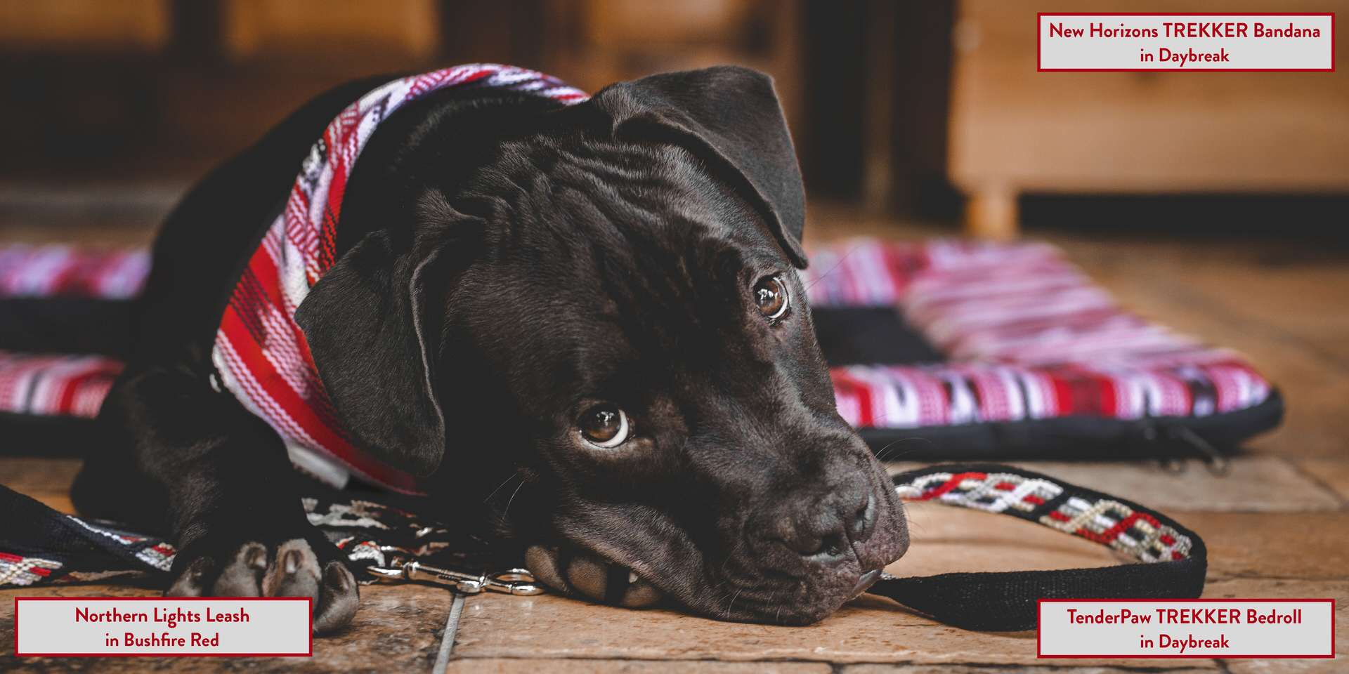 Pages 10 and 11 of RUFFLY's lookbook catalogue of dog gear feature a black dog laying on a red bed with matching leash and bandana