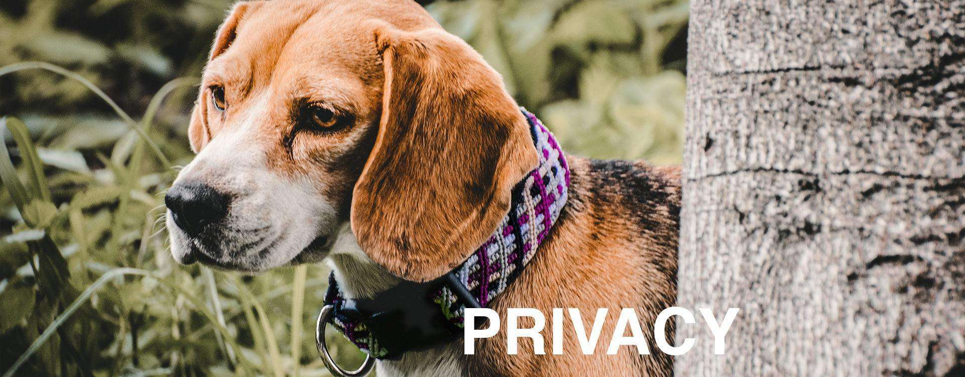 """Brown and white dog stands about tall grass and hides beside tree with overlaid text: """"PRIVACY"""""""