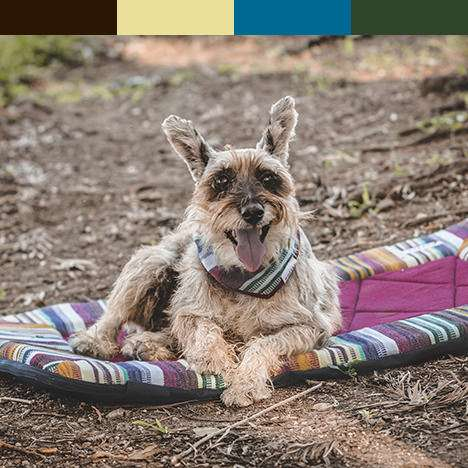 Dog with brown and green dog travel bed with matching color bar