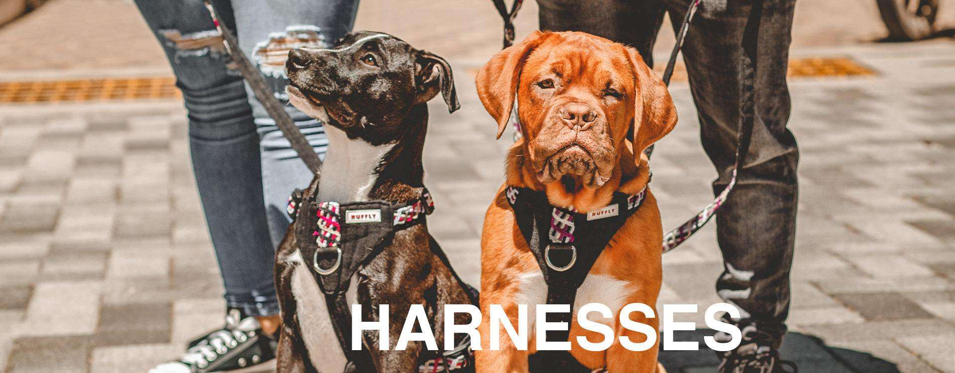 """Black dog looks upward and brown dog looks at camera while both dogs wear matching pink and purple ethically-made outdoor dog harnesses with overlaid text: """"HARNESSES"""""""