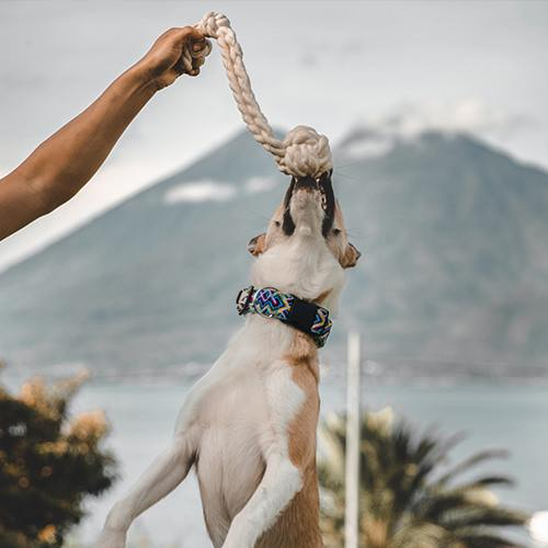 Dog leaps up to grab cotton rope fetch toy