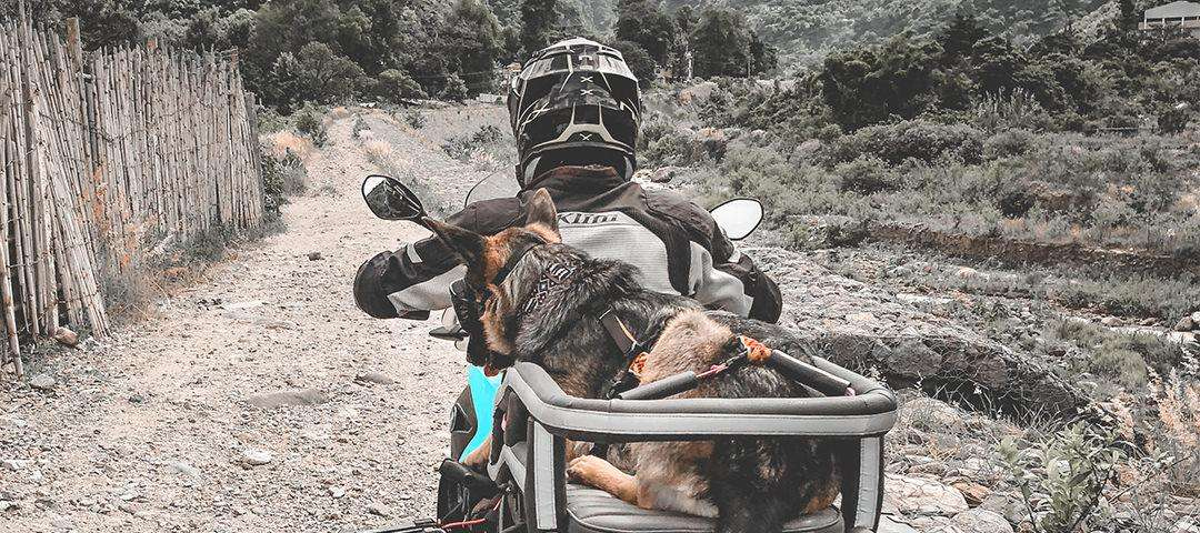 Man rides difficult, rocky off-road trail on large motorcycle with German shepherd on the back