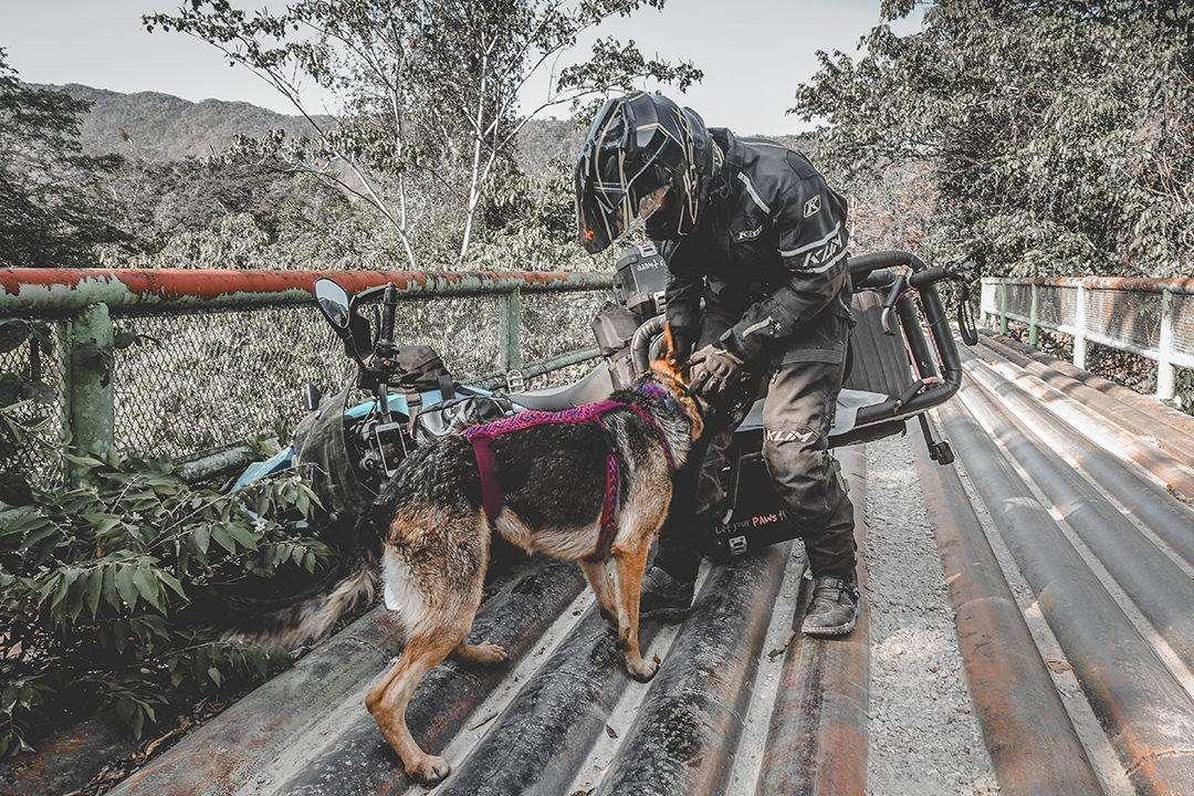 Motorcyclists with German Shepherd dog stands beside motorcycle crash on old bridge