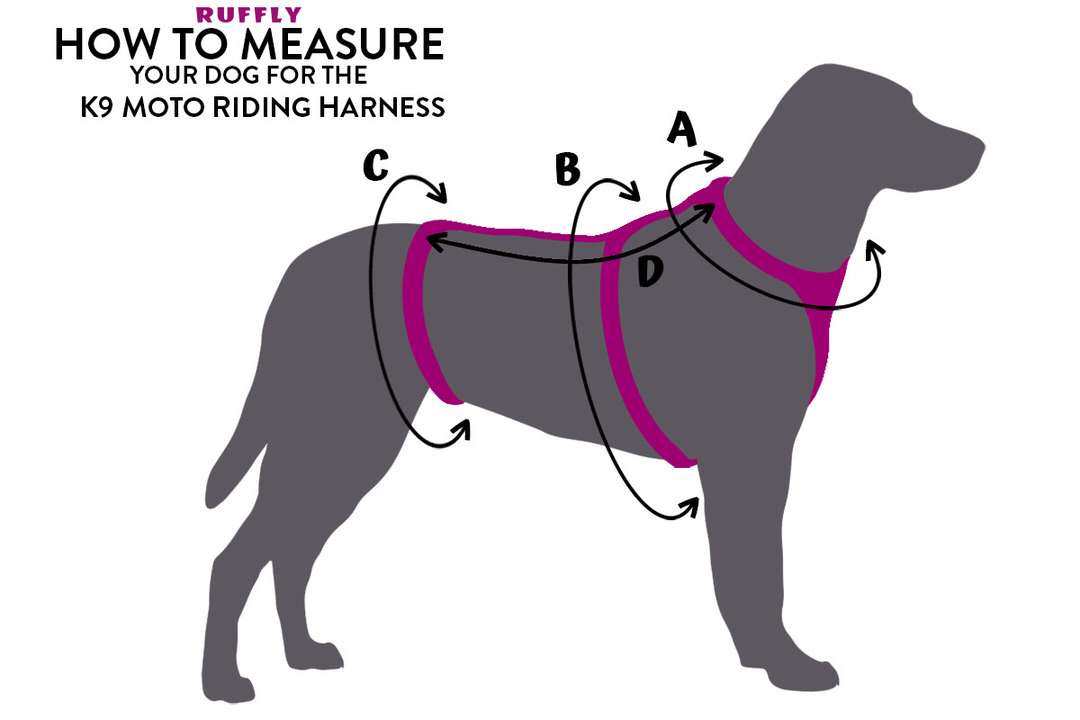 Diagram for how to measure your dog for a custom-made motorcycle dog harness for safe bike riding