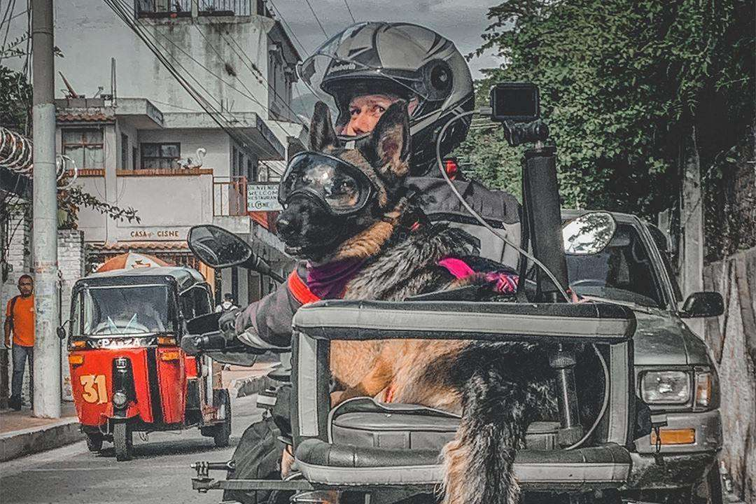Woman rides motorcycle with German Shepherd in dog carrier and both look back at traffic