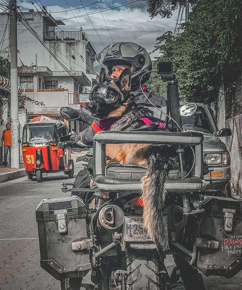 Woman and German Shepherd dog riding motorcycle look backwards at traffic