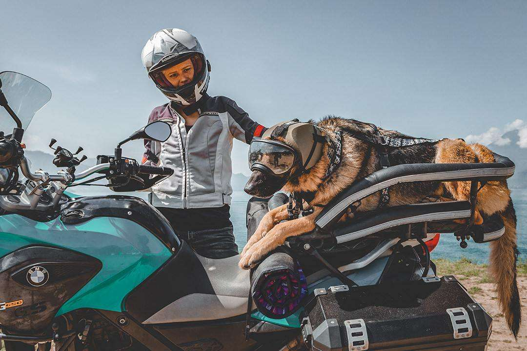 Woman with German shepherd on adventure motorcycle and wearing dog googles and ear protection