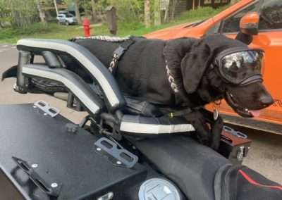 black dog wearing a harness lays in a motorcycle dog crate on a big motorcycle
