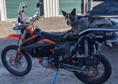 Brown and beige Heeler in a motorcycle dog carrier mounted to a light dual sport motorcycle