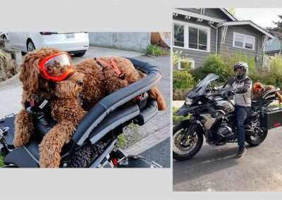 brown shaggy dog wearing orange goggles in a motorcycle dog carrier on a BMW adventure motorbike