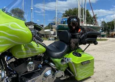 Shaggy black dog lays in a motorcycle dog carrier on a custom green Harley-Davidson