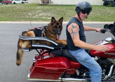 Man rides Harley Davidson Street Glide with German Shepherd in a large motorcycle dog carrier