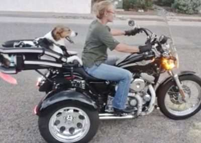 Woman rides a trike motorbike with a large dog in a motorcycle dog carrier