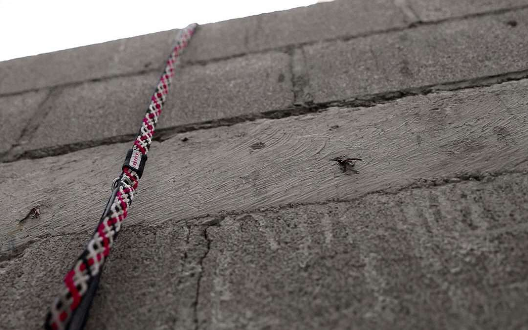 Pink and black leash from the top of a stark concrete wall