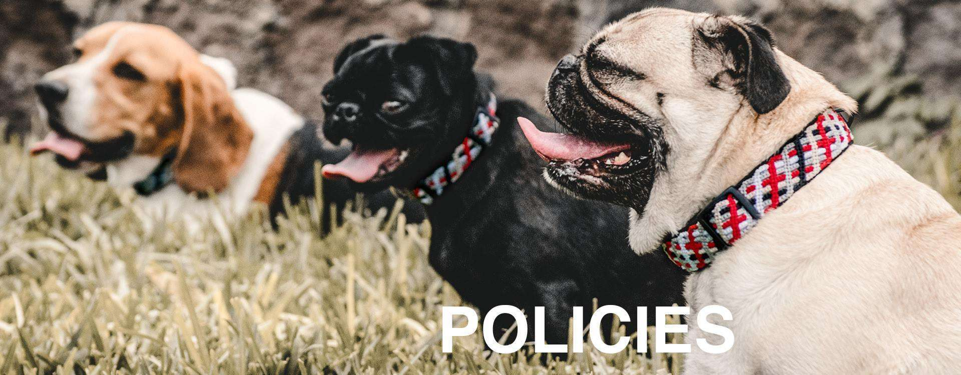 """Three dogs sit together in tall grass while wearing ethically made outdoor dog collars and overlaid text: """"POLICIES"""""""
