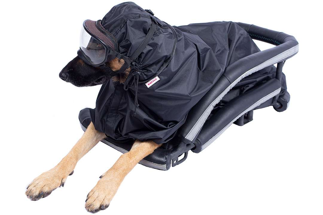German shepherd dog wears rainfly poncho while laying in a motorcycle dog carrier on a white background