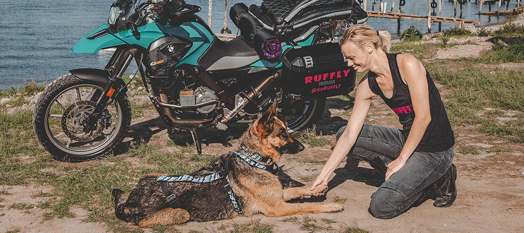 German shepherd lays beside adventure motorcycle and gives paw to young woman who kneels