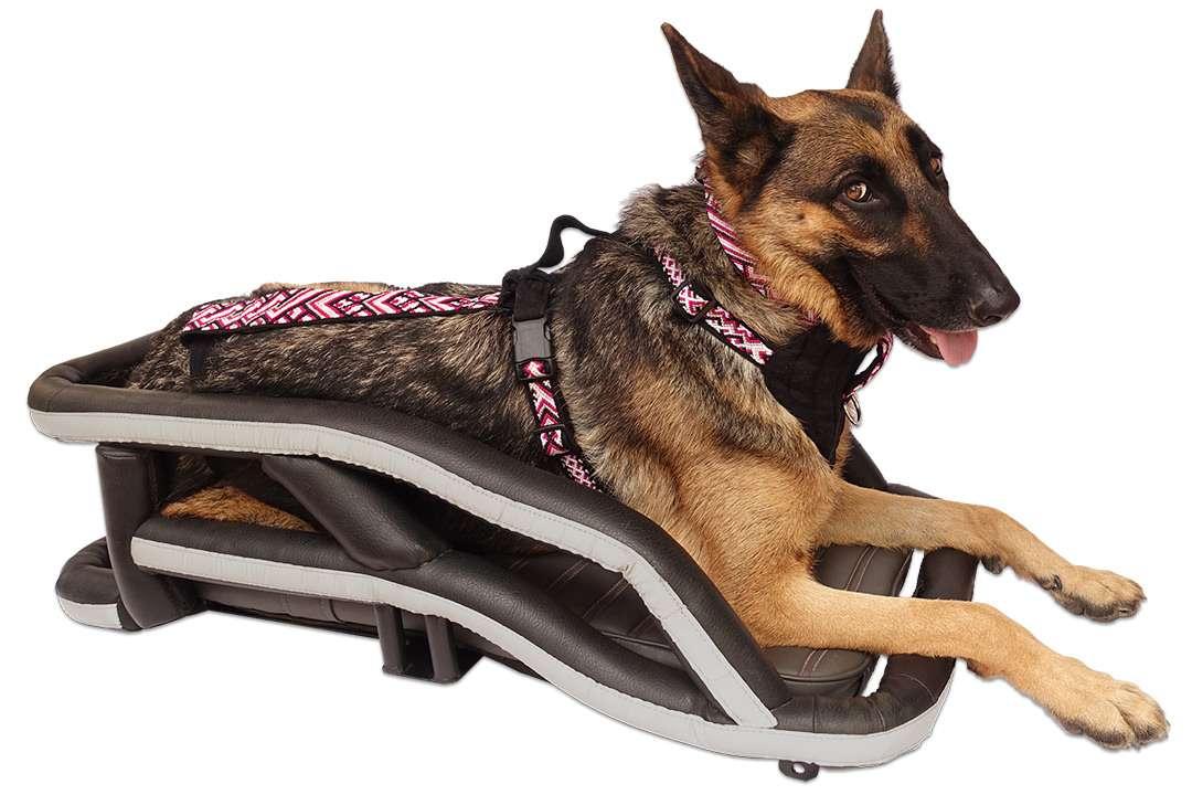 Happy German Shepherd lays in upholstered motorcycle dog carrier