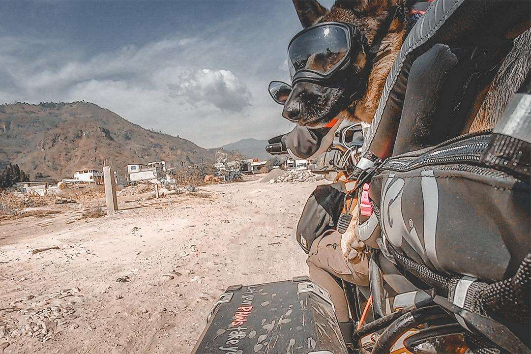 German shepherd in motorcycle dog carrier looks out while riding off-road