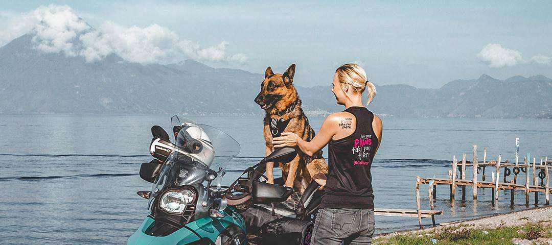 German shepherd sits on motorcycle dog carrier as woman laughs