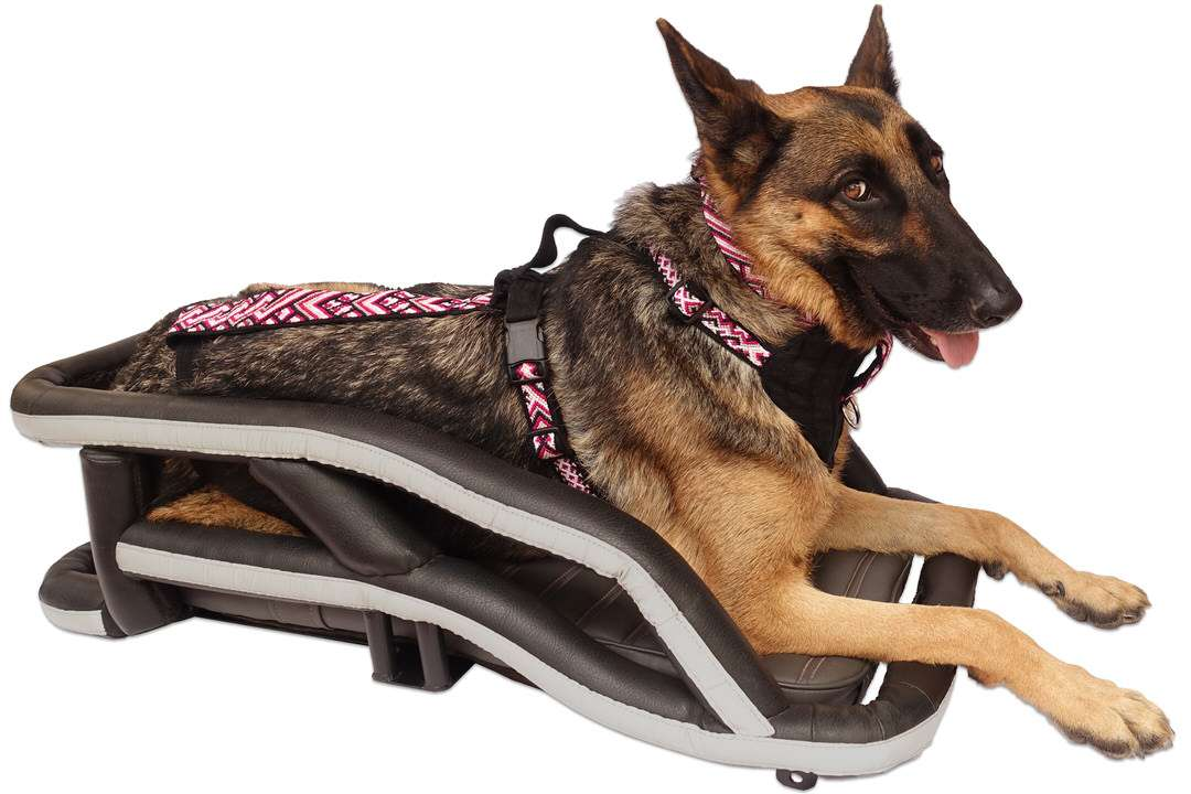 German Shepherd lays on motorcycle dog carrier while wearing riding harness