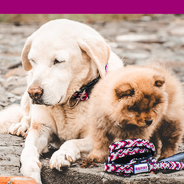 Dog wears pink leash with pink color bar