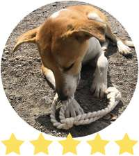 Beige and white dog paws at dog rope toy in the dirt