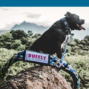 Dog wears blue leash with blue color bar