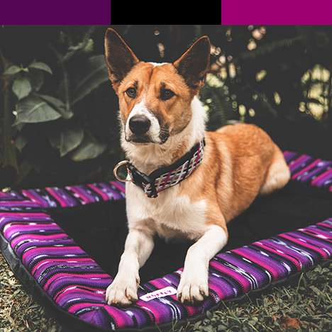 Dog with pink and purple dog travel bed with matching color bar