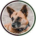 Dog wears brown and green collar in brown and green circle