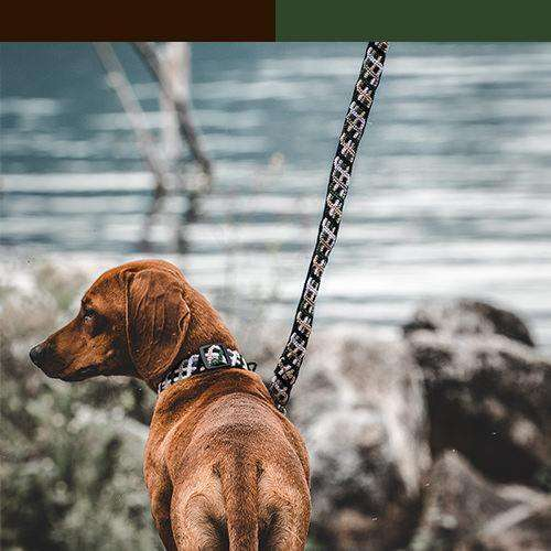 Dog wears brown and green leash with brown and green color bar