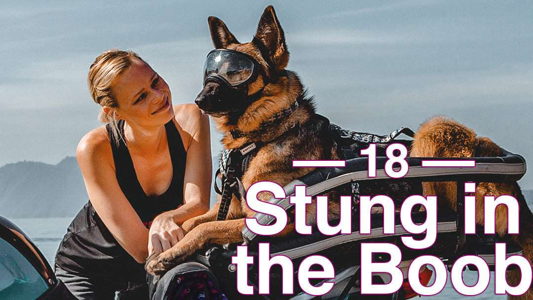 Woman leans over motorcycle where German Shepherd wearing goggles lays on motorcycle dog carrier