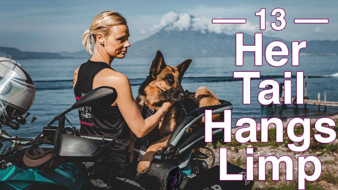 Blonde woman sits backwards on motorcycle and pets a German Shepherd that lays in a motorcycle dog carrier