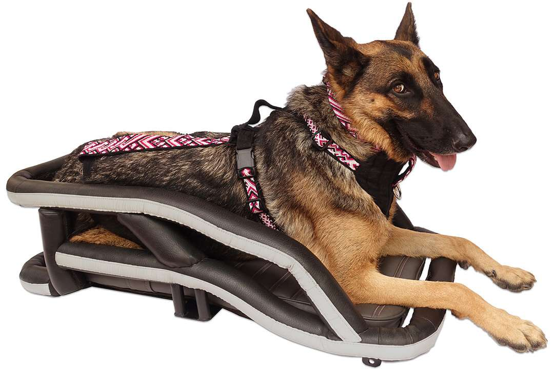 German Shepherd lays in motorcycle dog carrier while wearing a custom-made motorcycle dog harness to ride safely