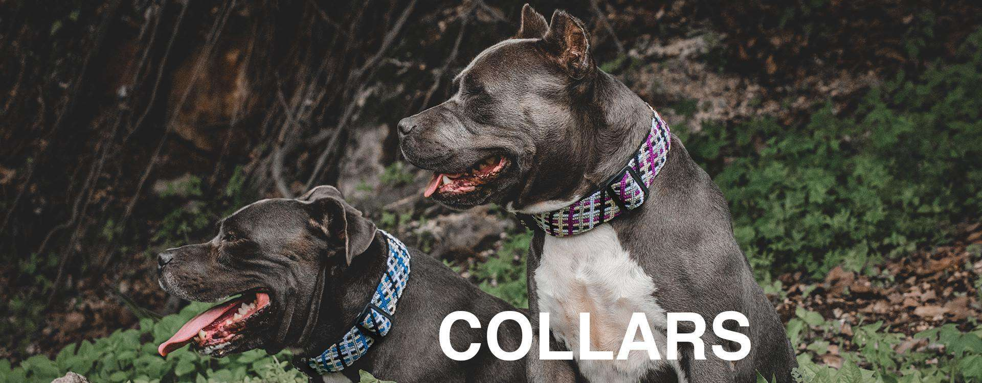 Two panting Pitbulls wearing ethical fashion dog collars in matching designs sit among bushes and look to the left